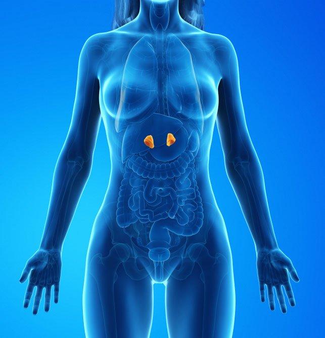 Adrenal Tümörler - Böbrek üstü bezleri